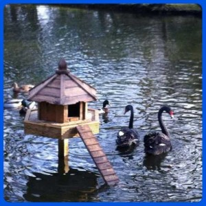 Duckhouse (4)