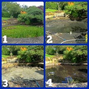 Pond clean 1